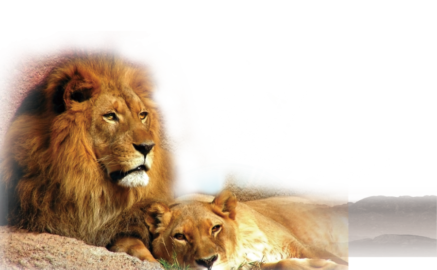 Lion and Cub PNG Image