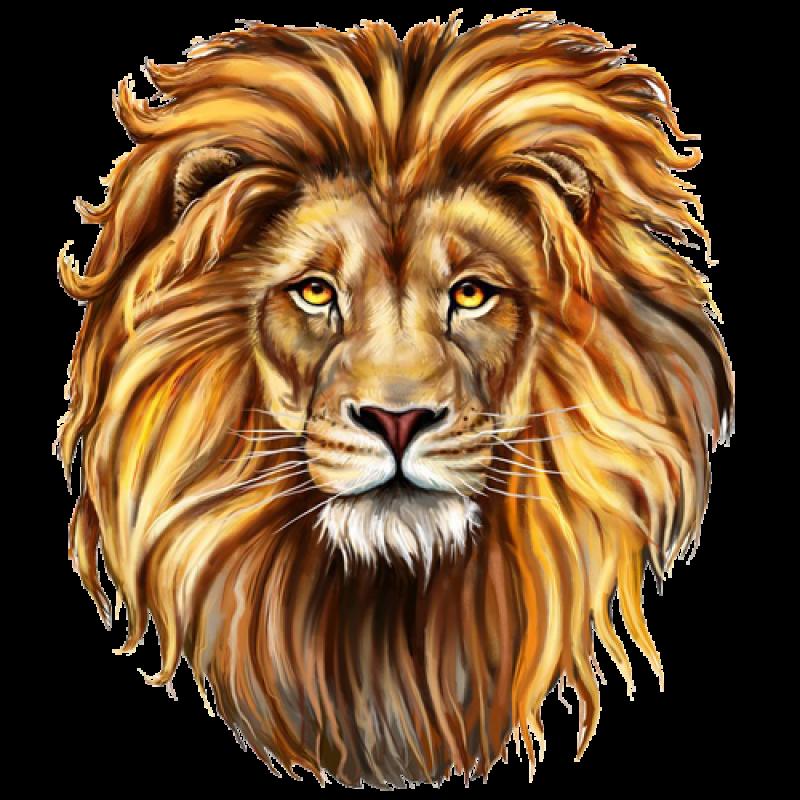 Lion PNG Image