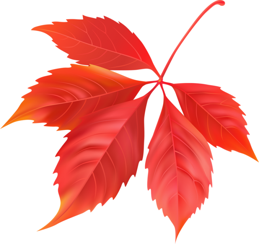 Red Maple Leaf PNG Image