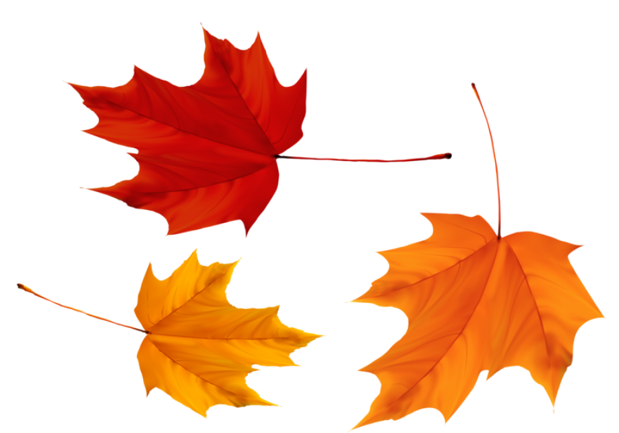 Red and Yellow Maple Leaves PNG Image