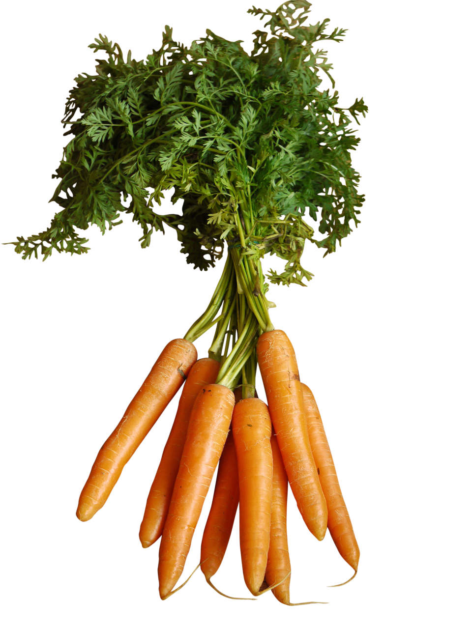 Orange Carrots with Stem PNG Image