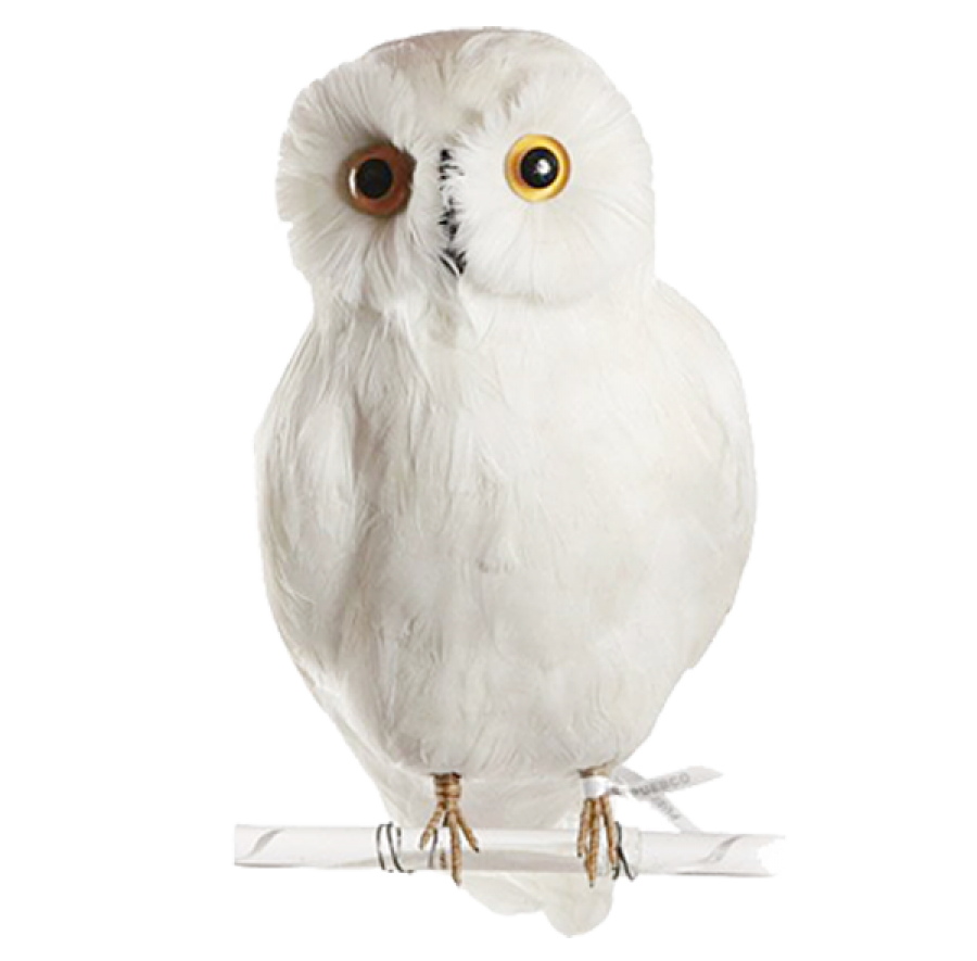Owl PNG Image