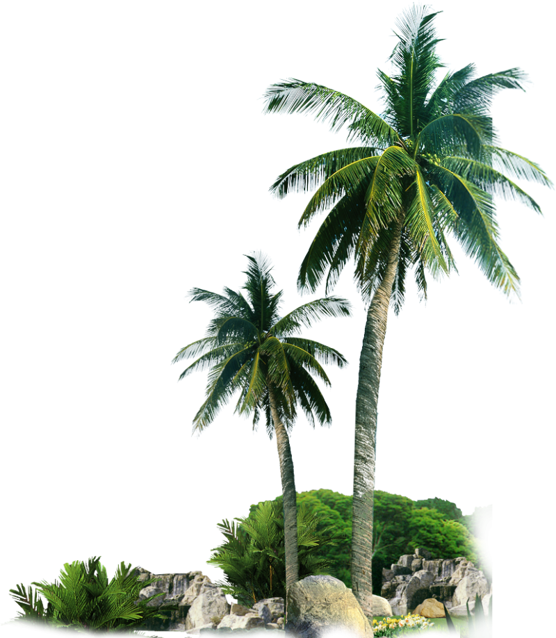 Palm Trees by Rocks PNG Image - PurePNG   Free transparent ...