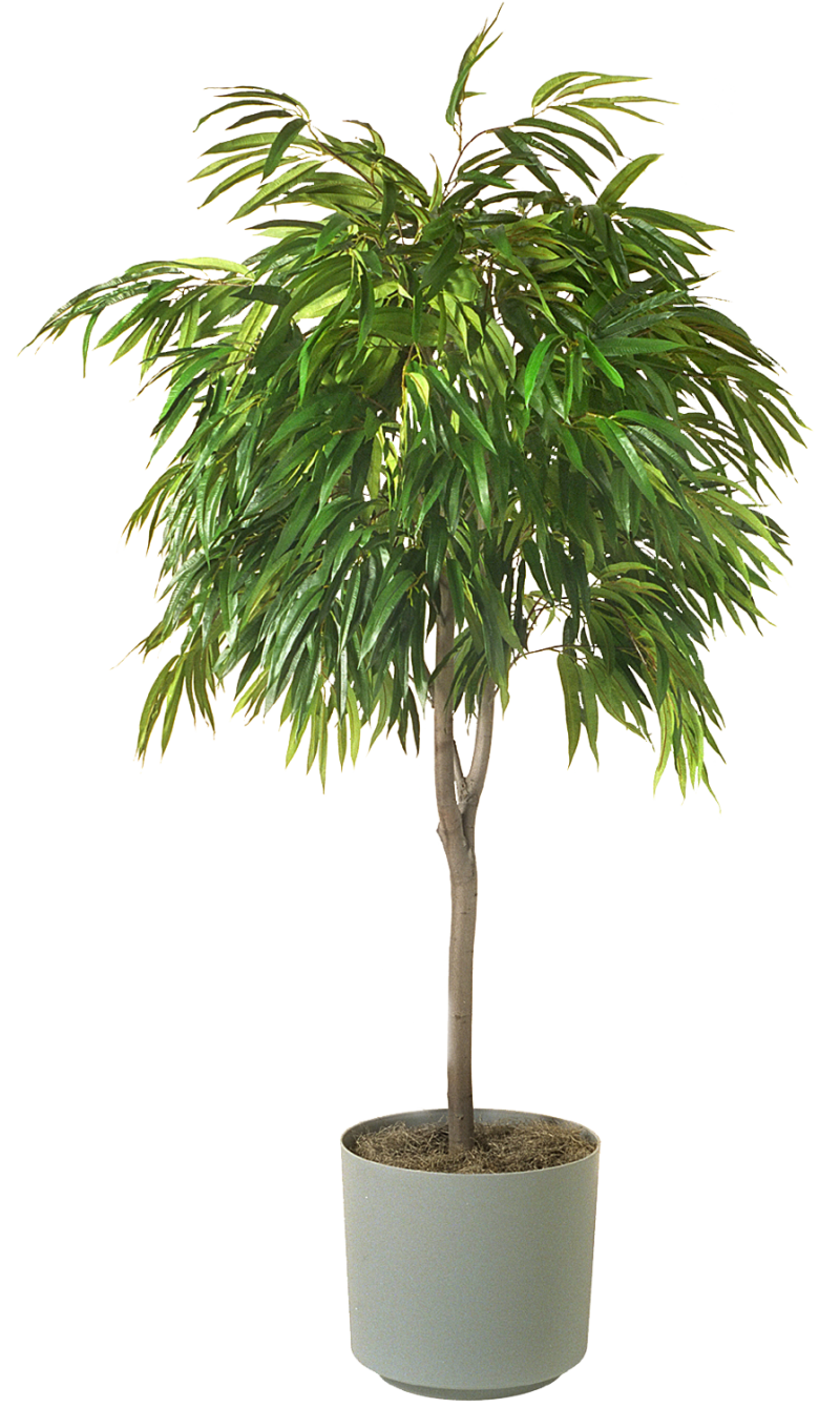 Houseplant PNG Image