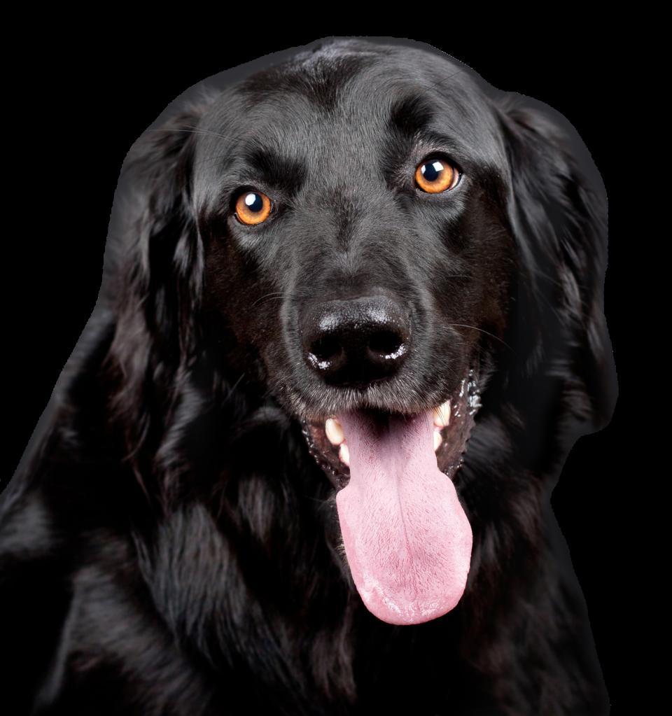 Black Dog PNG Image