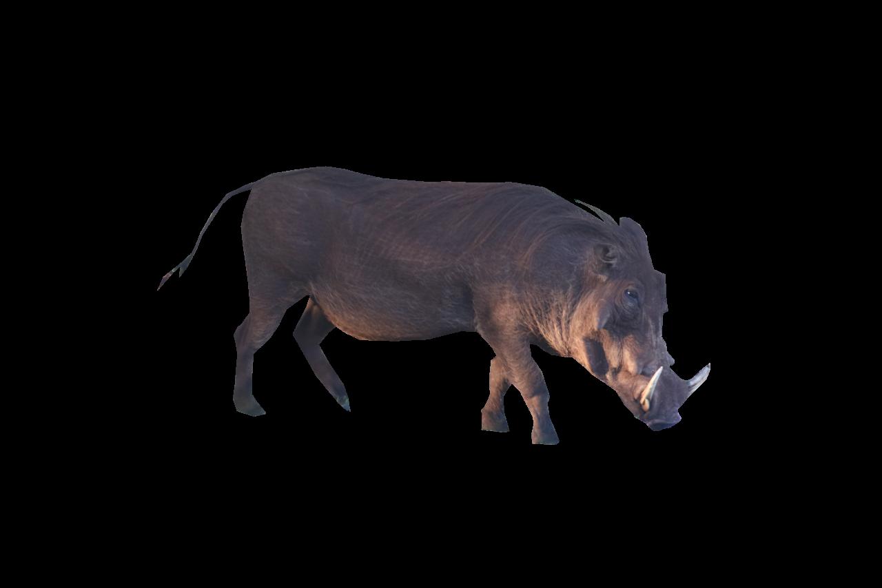 Brown Boar Standing PNG Image