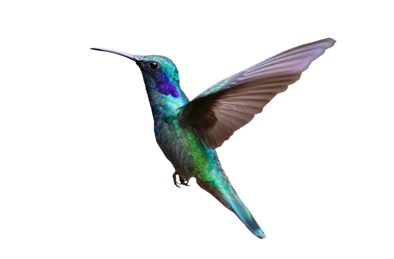 Colorful Hummingbird Flying PNG Image