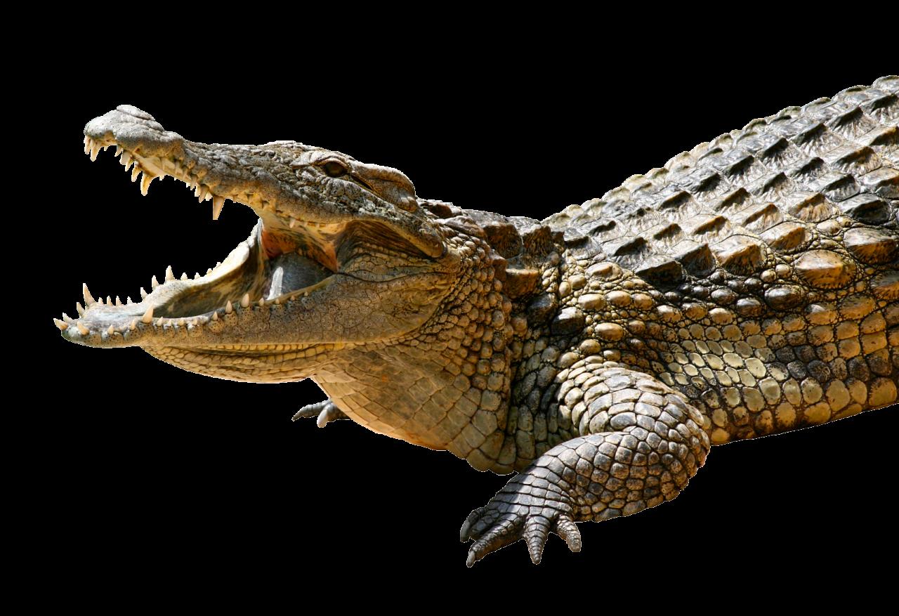 Crocodile PNG Image - PurePNG | Free transparent CC0 PNG ...