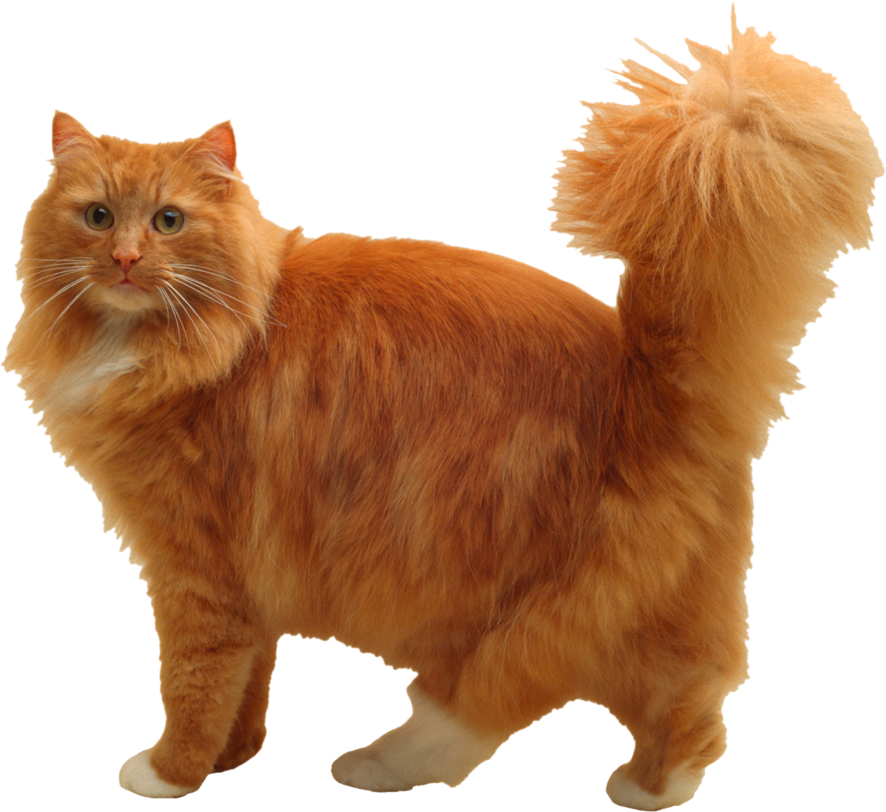 Cuddly Cat PNG Image