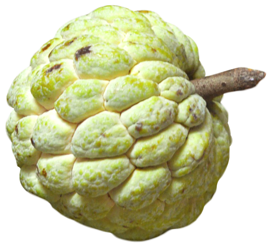Custard Apple PNG Image