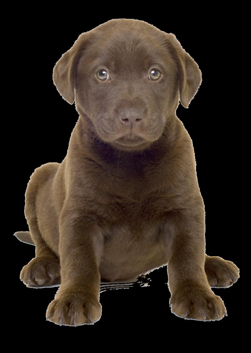 Cute Dog Whelp PNG Image