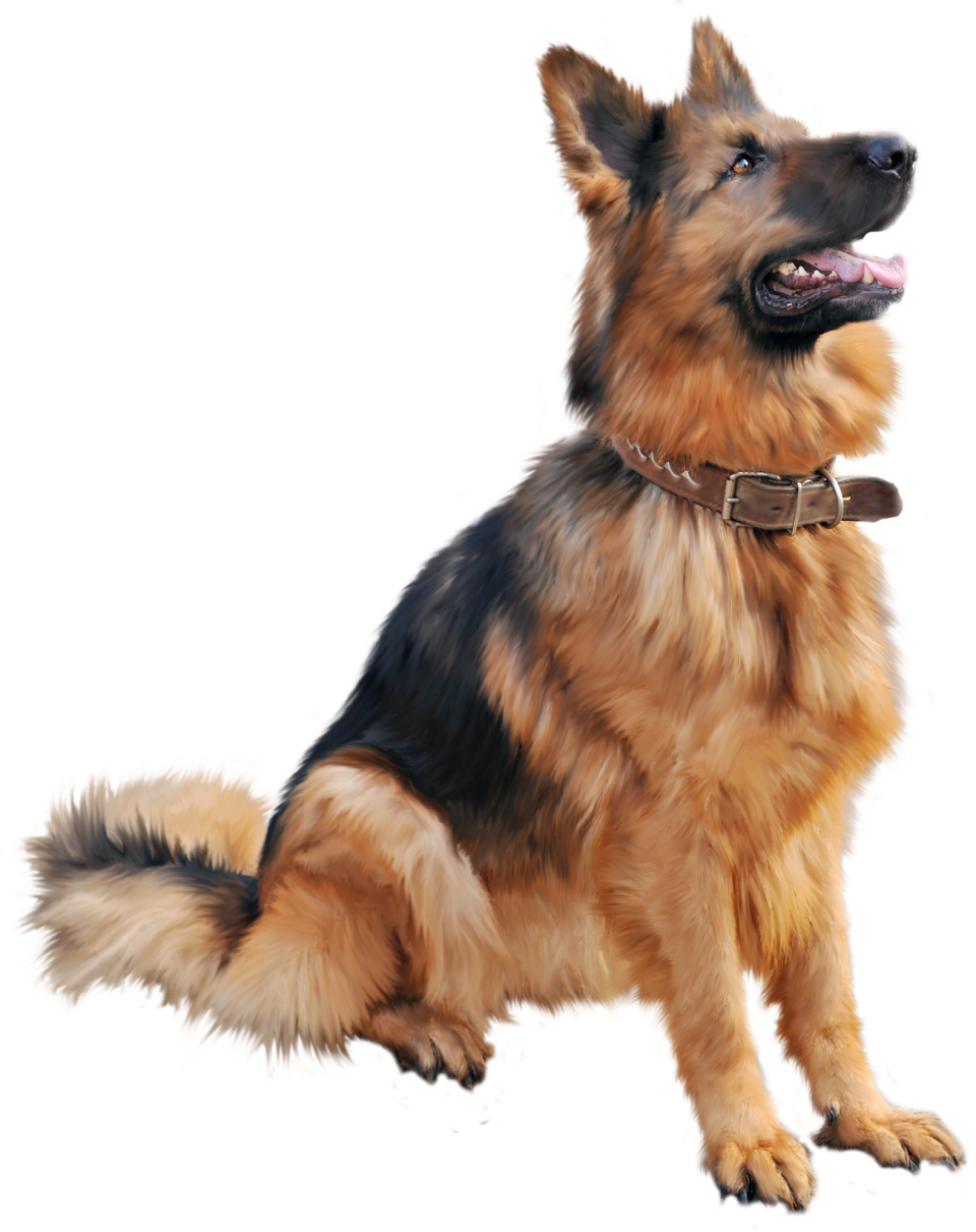 Cutest Dog sitting PNG Image