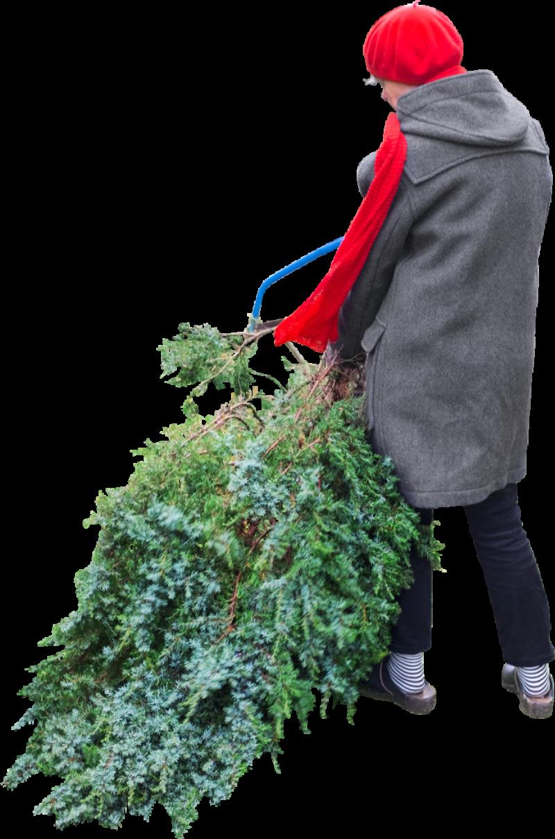 Cuts Tree PNG Image