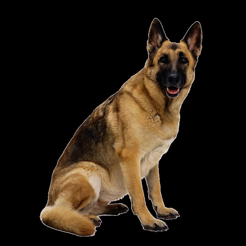 Dog Png PNG Image
