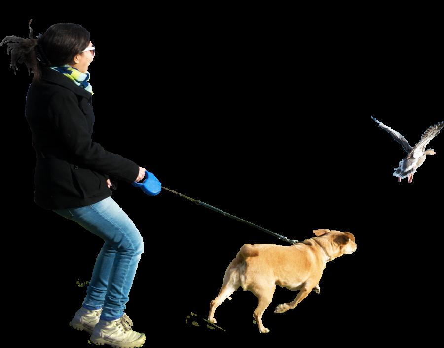 Dog Running At Birds PNG Image