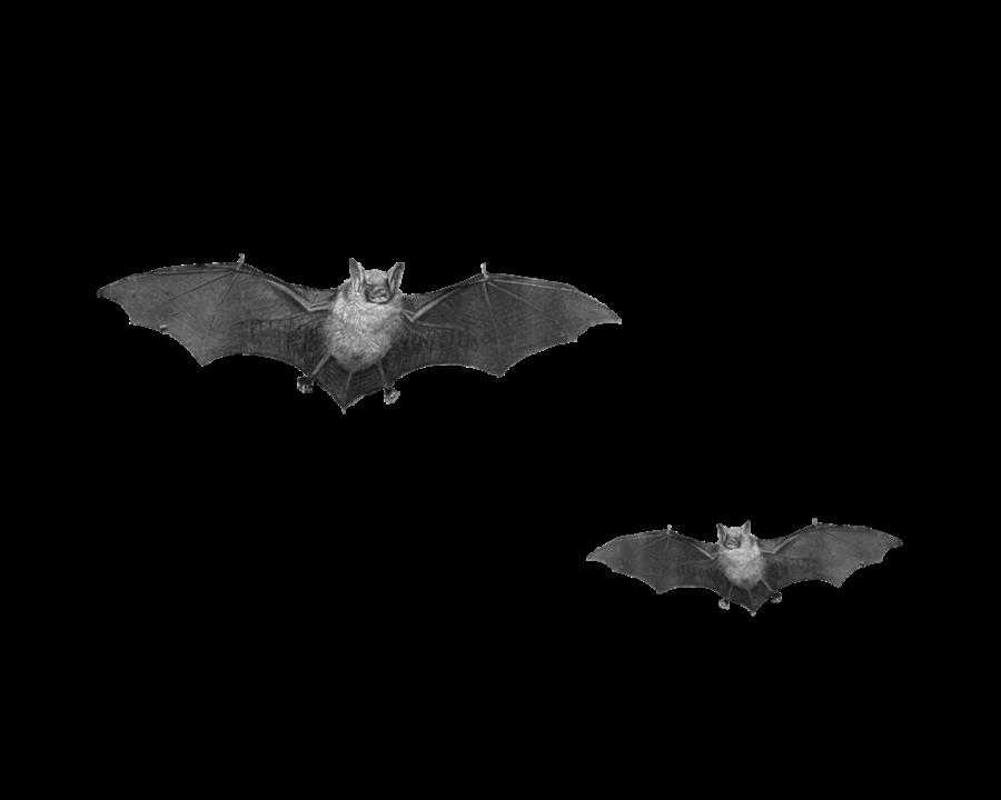Flying Bats PNG Image