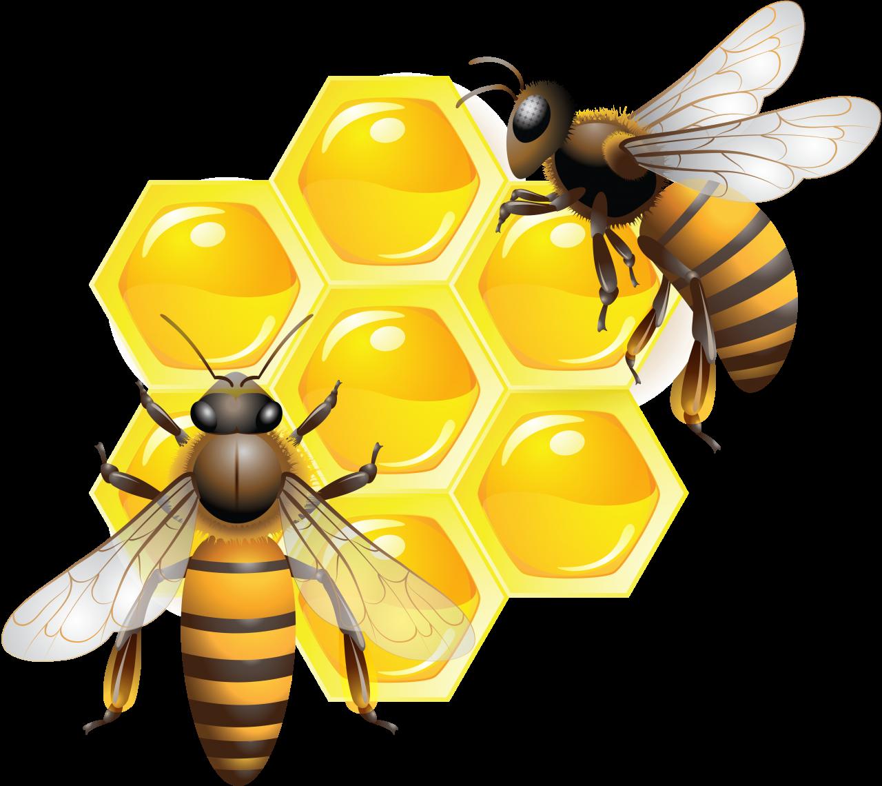 Honey PNG Image - PurePNG | Free transparent CC0 PNG Image ...