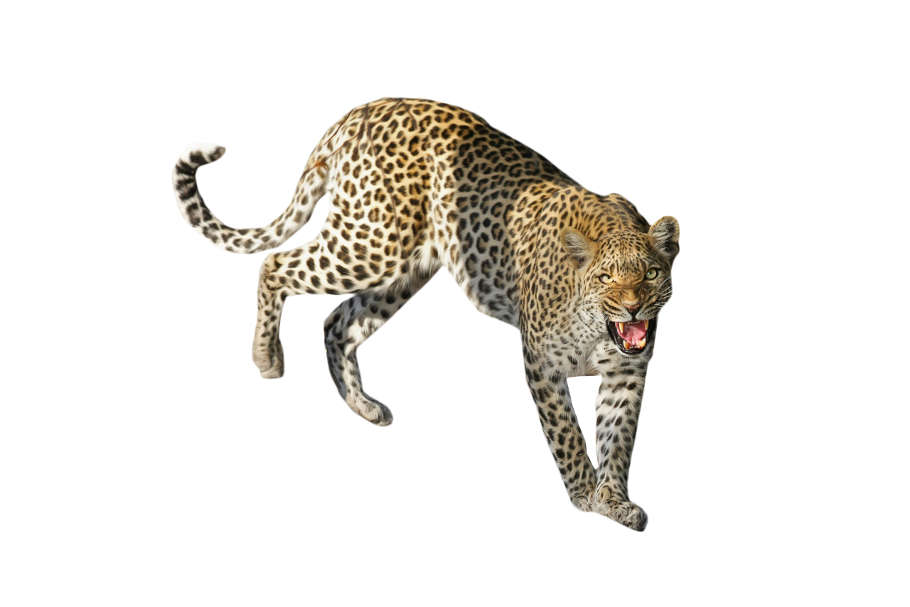 Leopard Standing PNG Image