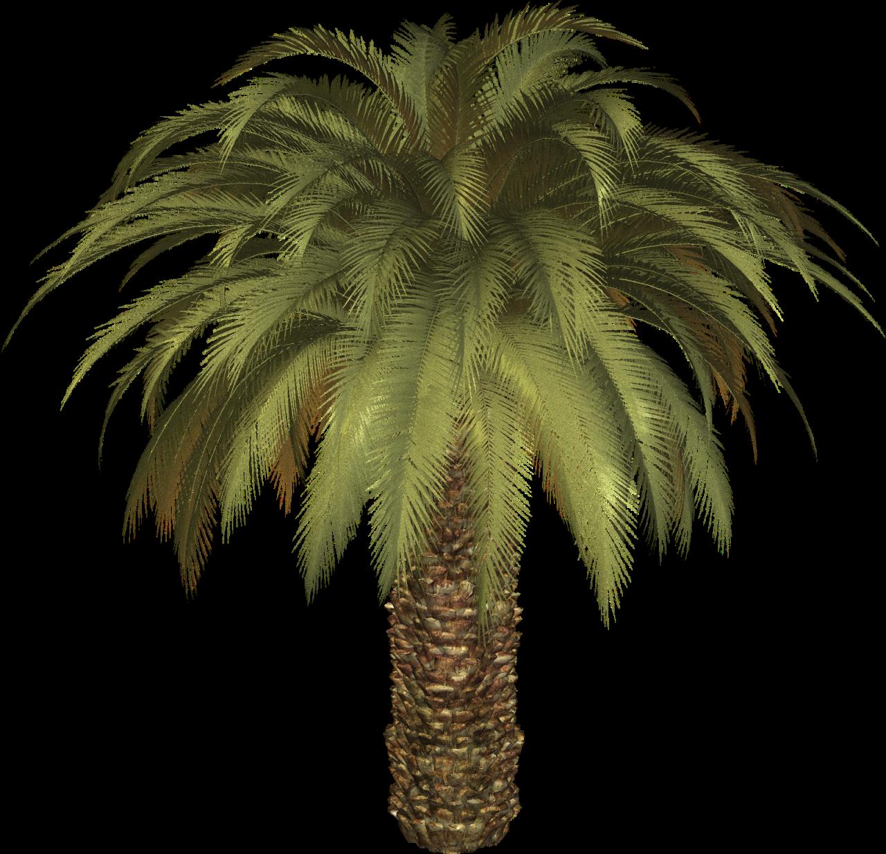 Ruffled Fan Palm or Vanuatu Fan Palm (Licuala grandis