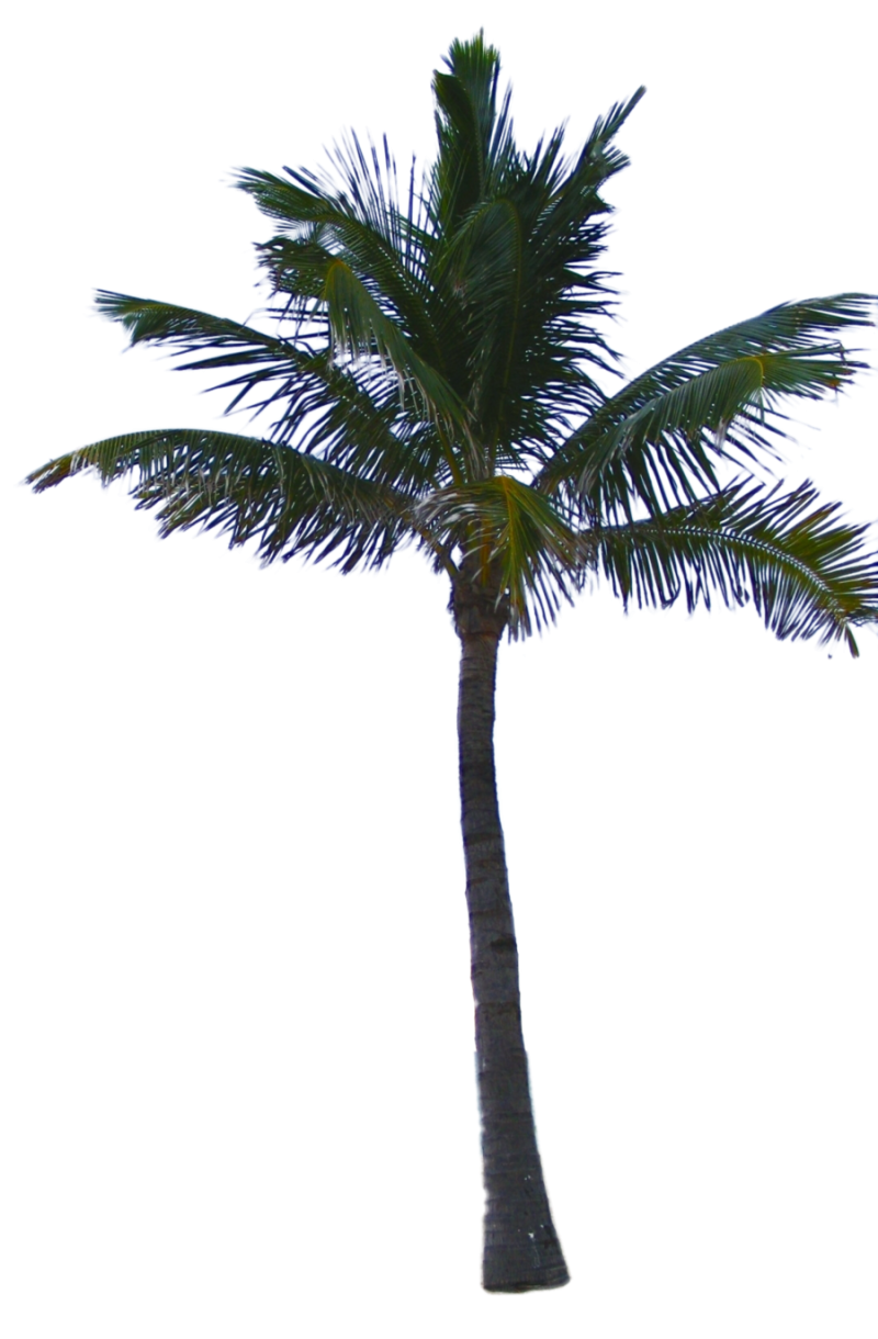 Shop Nearly Natural 52-inch Artificial Fan Palm Tree