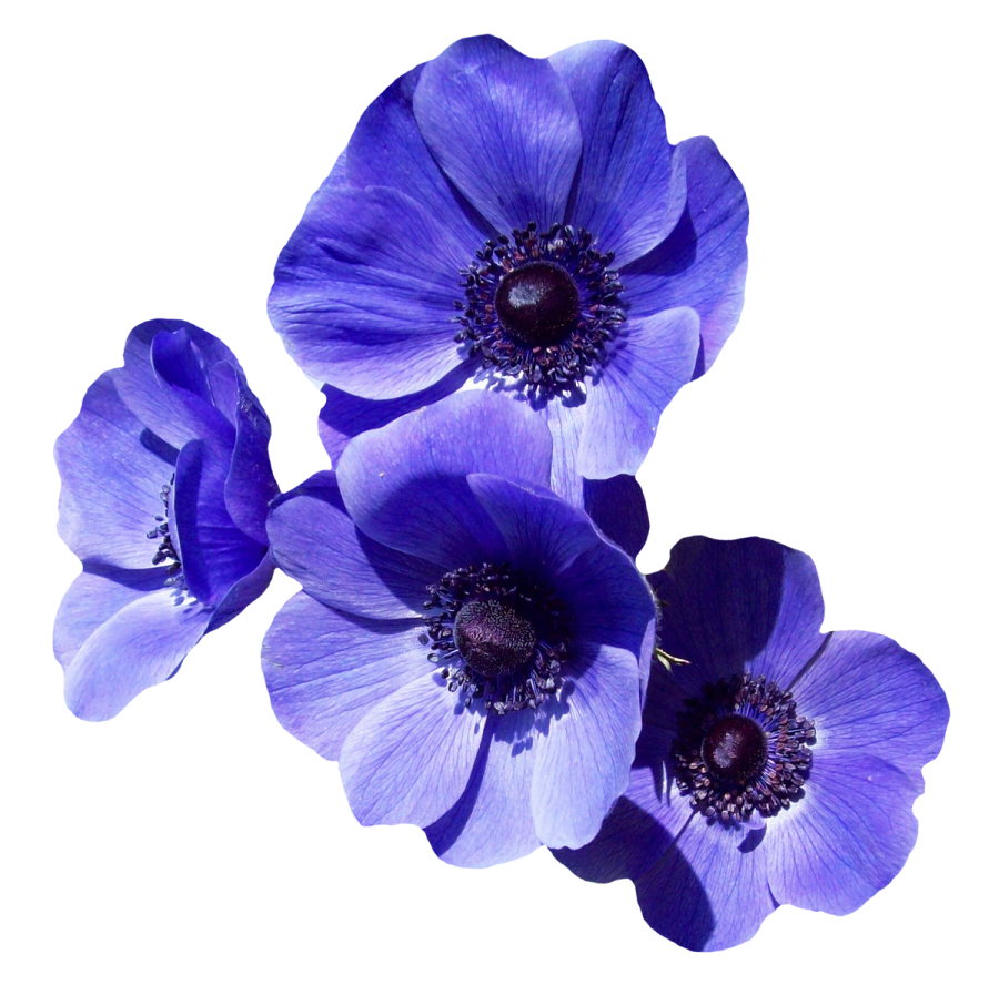 Purple Flower PNG Image