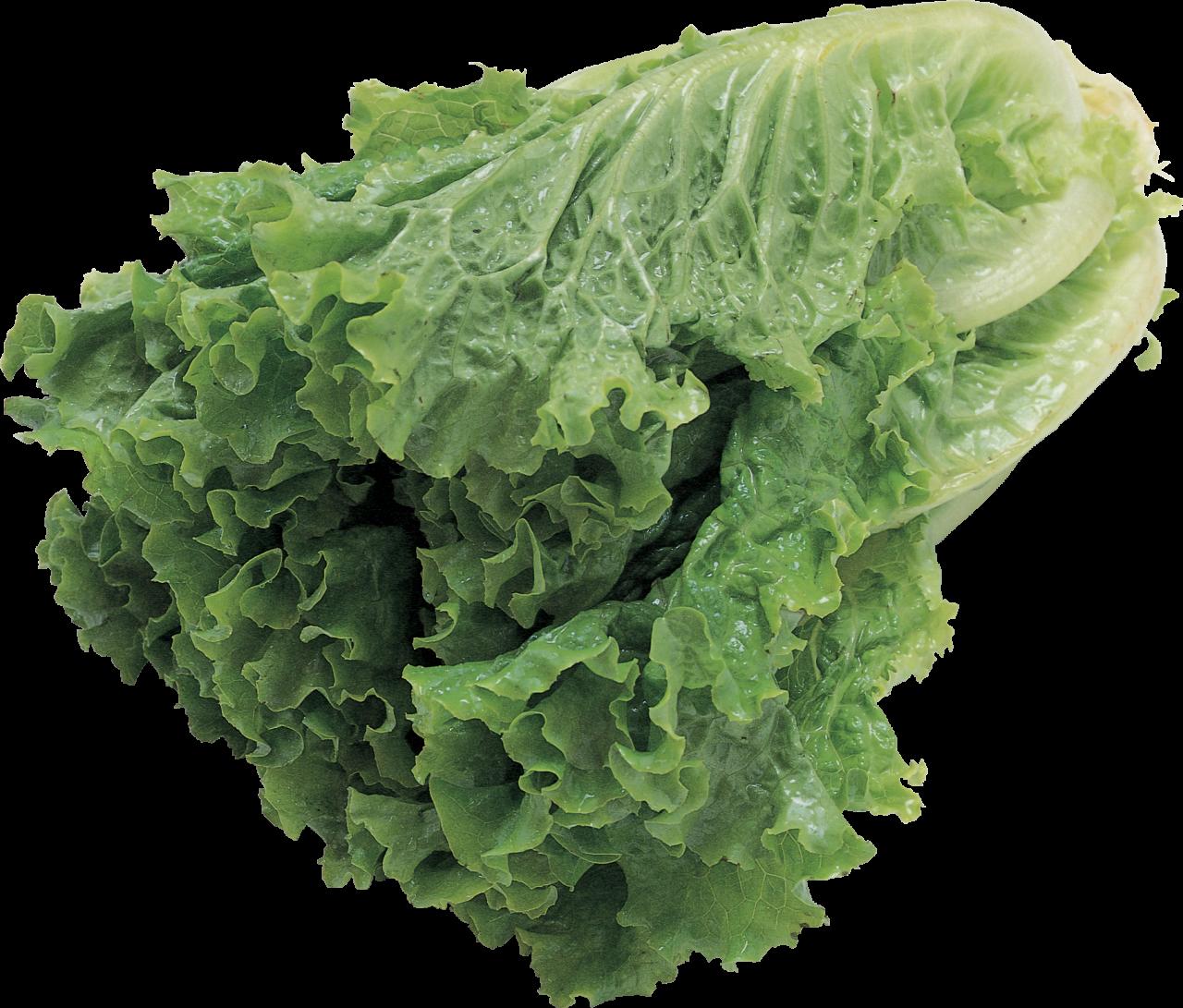 Salad PNG Image