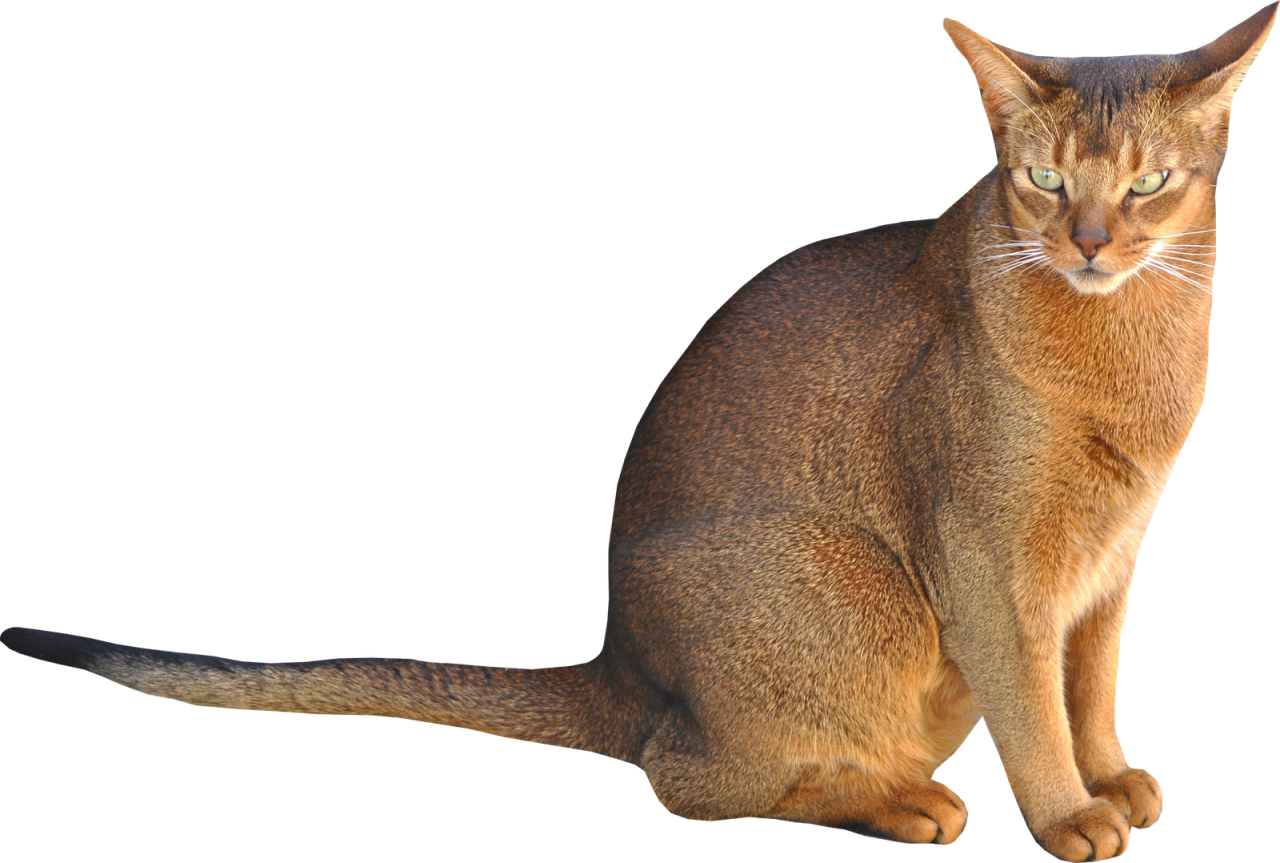 Sitting Cat PNG Image