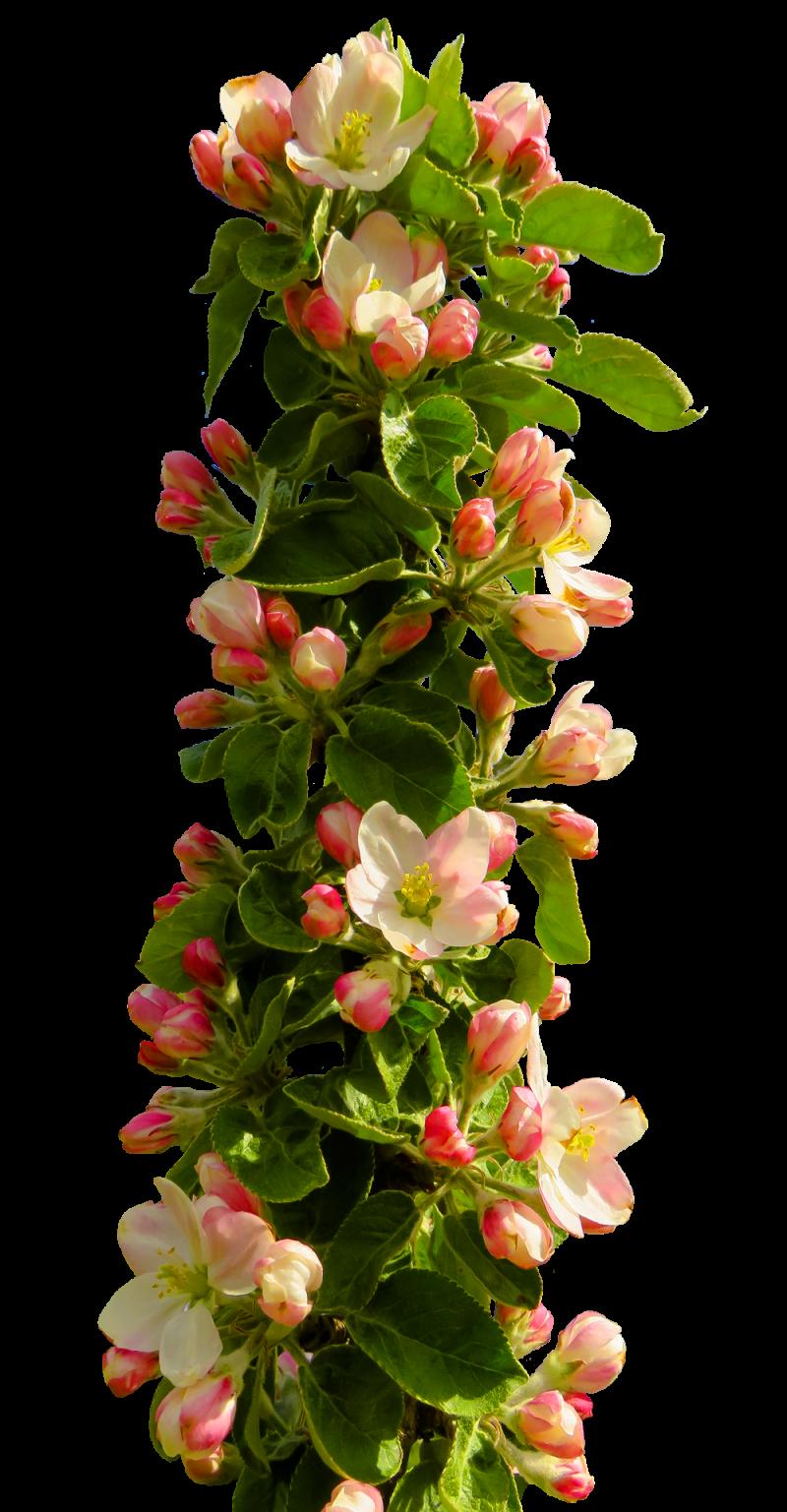 Spring Flower PNG Image