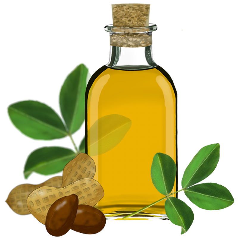 Sunflower Oil Clipart with Nuts PNG Image