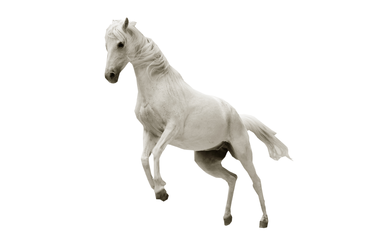 White Horse Jumping PNG Image