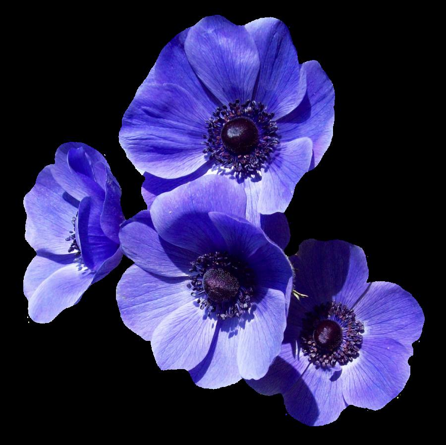 Purple Flowers PNG Image