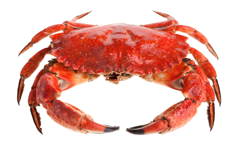 Red Crab PNG Image