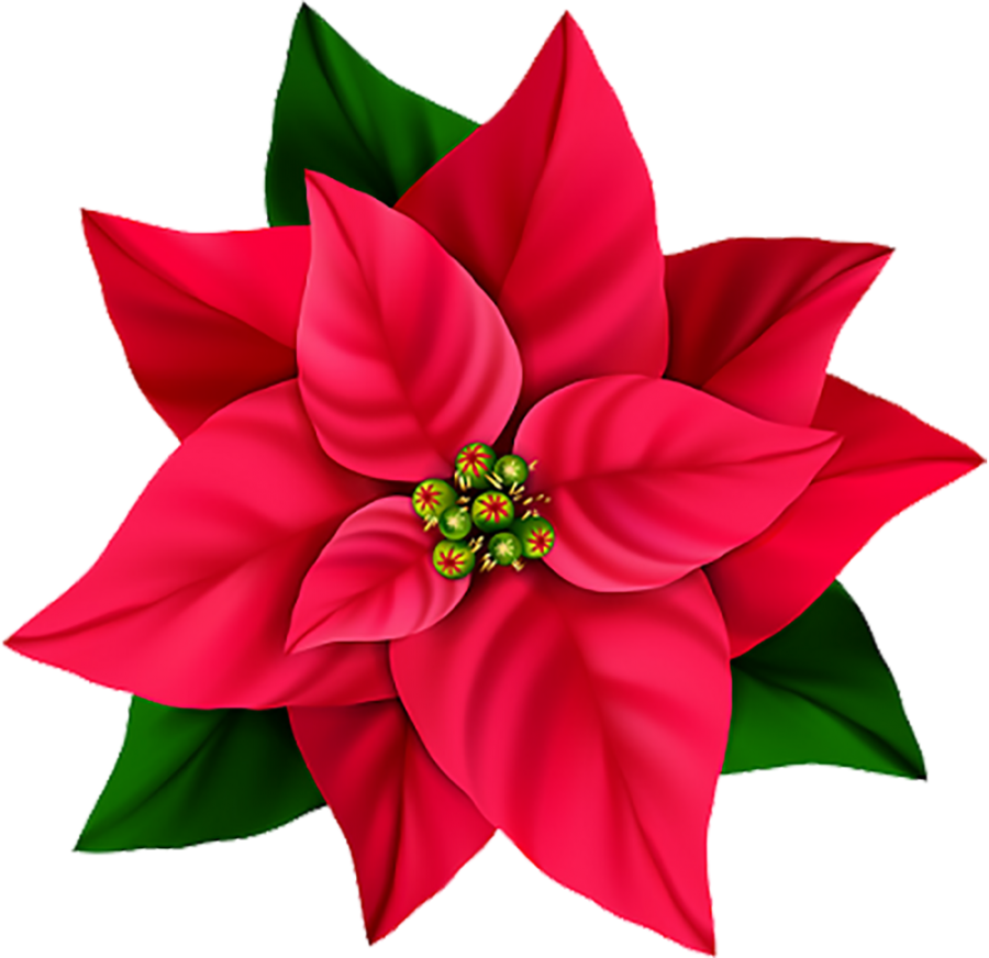 Red Flower PNG Image