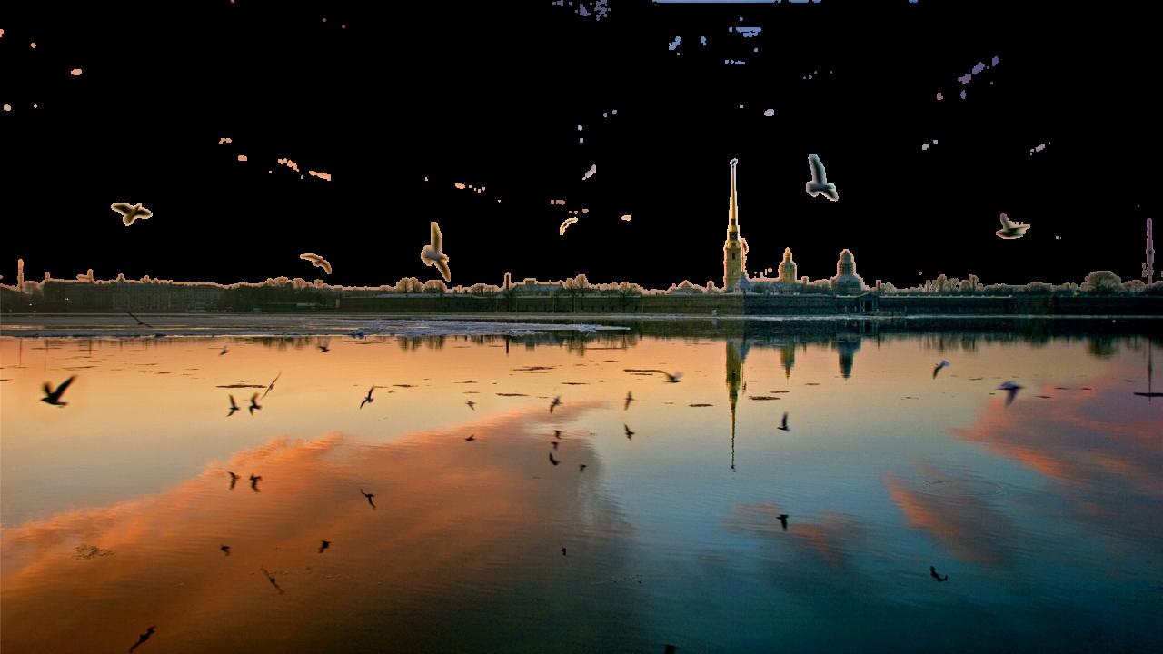 Birds flying at dusk PNG Image