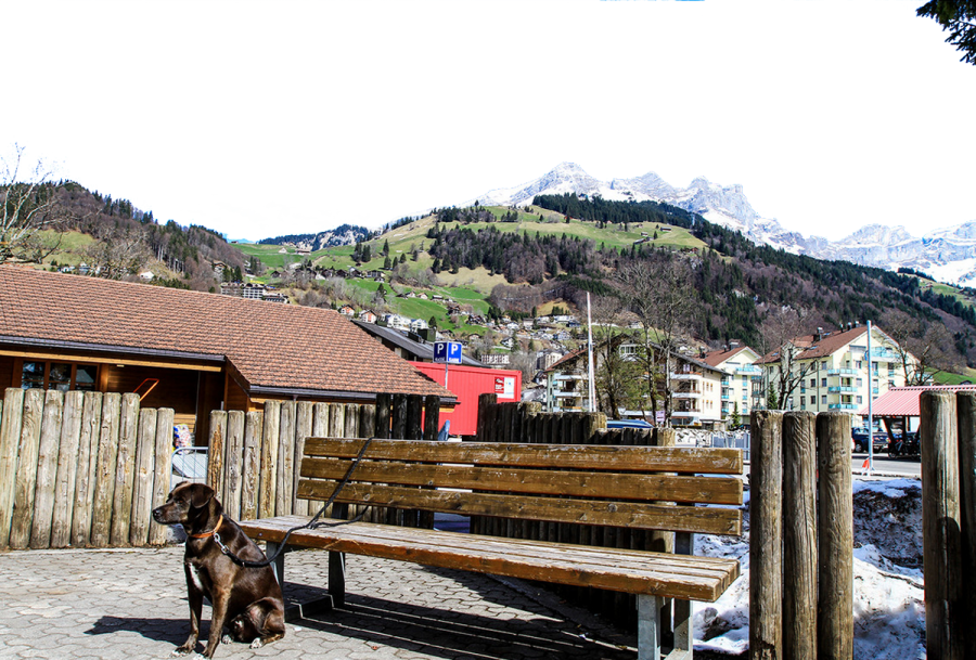Dog Chained to a Bench - Switzerland PNG Image