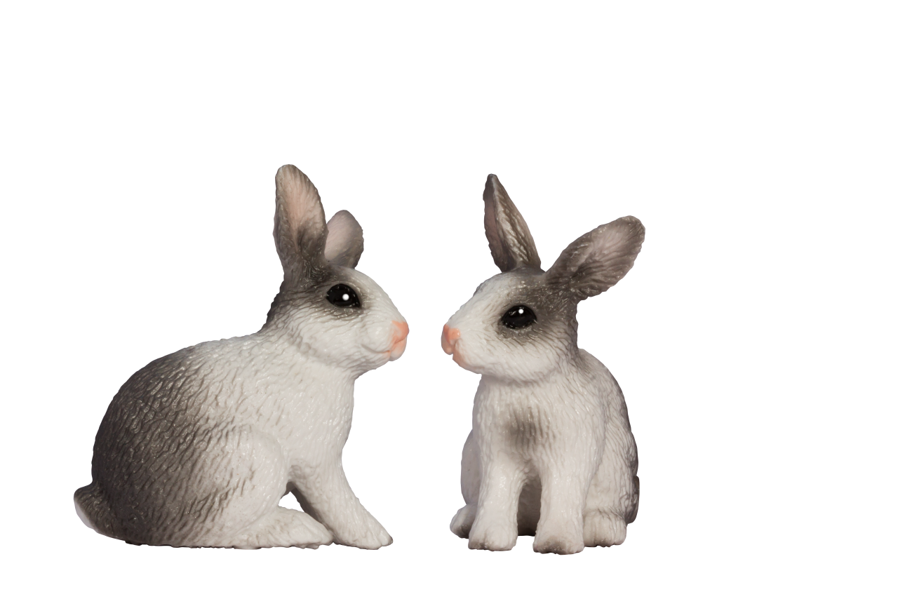 Two Rabbits PNG Image
