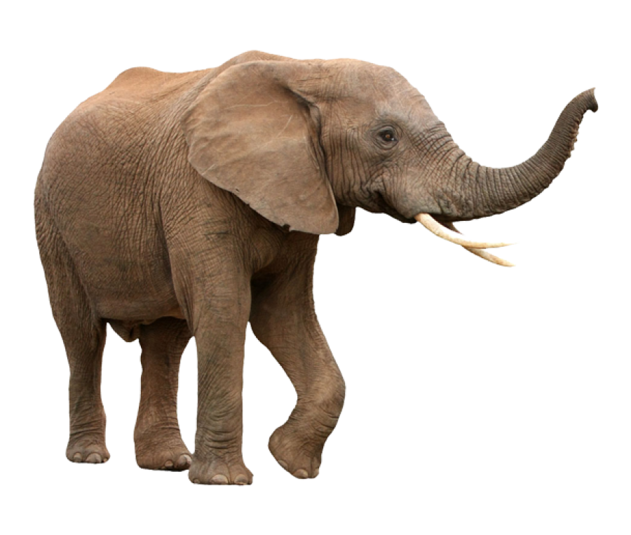 Walking Elephant PNG Image