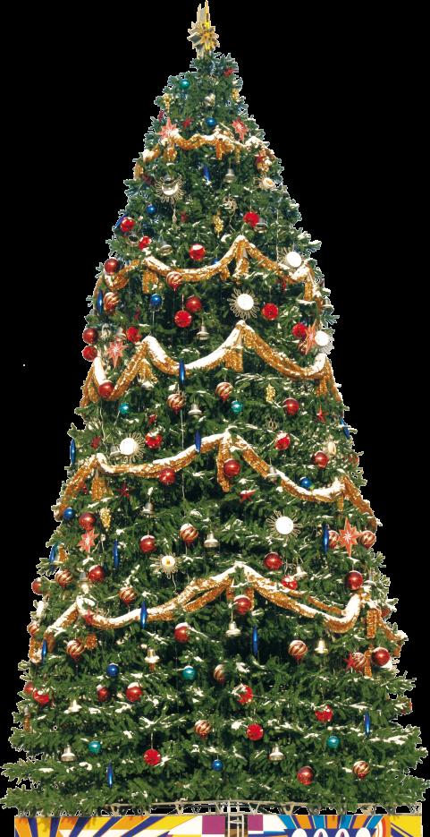 Big Traditional Christmas Tree PNG Image