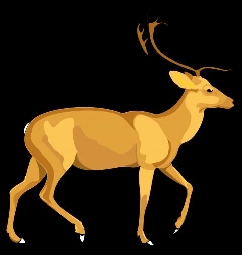 Deer Vector PNG Image