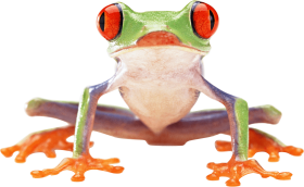 Crazy Green Frog  PNG