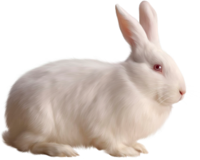 Albino Rabbit PNG