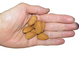 Almond in Hand PNG