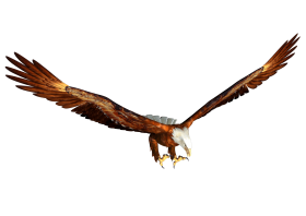 Animated bald eagle Hunting PNG
