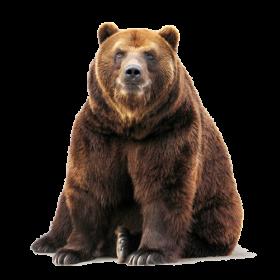 Bear PNG