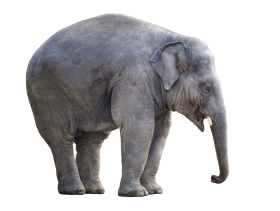 Big Elephant PNG