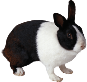 black and white rabbit PNG