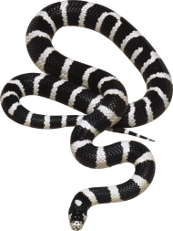 Black and White Snake PNG