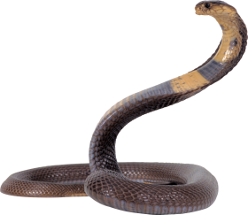 Black and Yellow Snake PNG