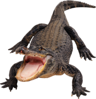 Black Crocodile PNG