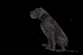 Black Great Dane PNG